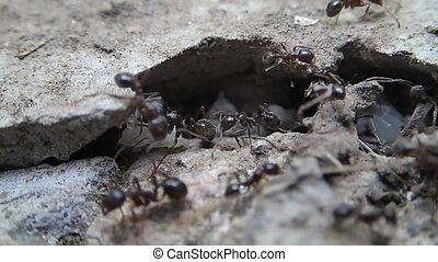 Ant working together - Ants working together