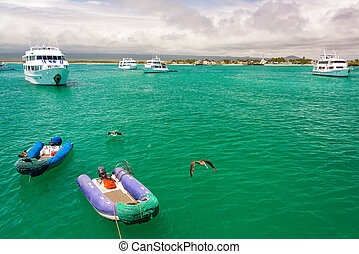 Boats and Pelicans in Galapagos - Boat and pelicans in a...