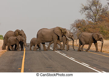 Group of wild elephants in southern Africa