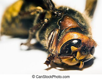 Dead wasp