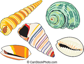 sea-shells - art illustration of isolated different...
