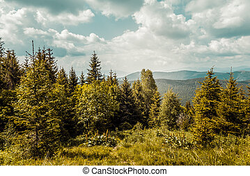 Carpathians mountains, Ukraine - Summer landscape in the...