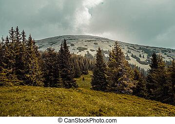 Carpathians mountains, Ukraine - Summer landscape in the...