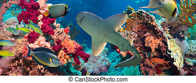 Tropical Anthias fish with net fire corals and shark on Red...