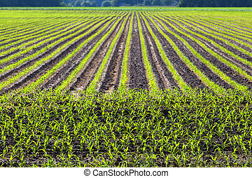 pattern of cultivated field