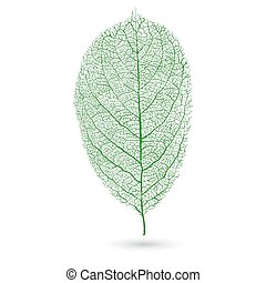 Natural green leaf with veins,transparent green leaf on a...