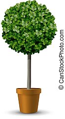 Decorative trimming boxwood tree in flowerpot
