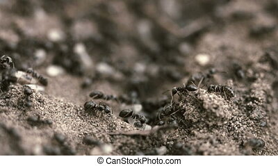 Small ants in their nest on the ground