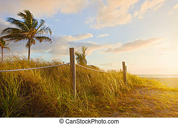 Grass dunes by the ocean at sunrise