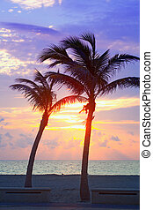 Palm trees on the beach at sunrise or sunset - Miami Beach,...
