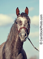 Portrait of a sports thoroughbred horse.