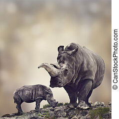 White Rhinoceros:Adult And Baby