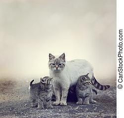 Sin hogar, gatitos, y, su, madre,