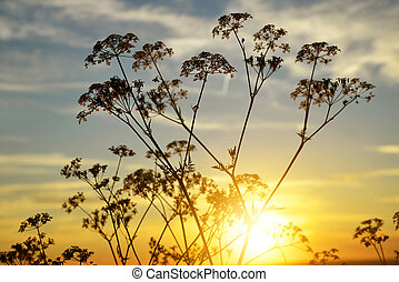 Flowers silhouette in the sunset.