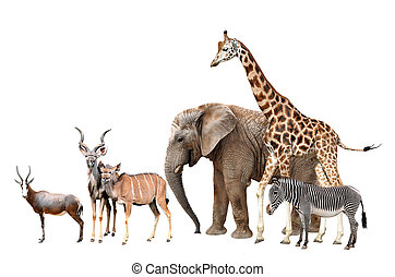 animals isolated - Giraffe, Elephant, Zebra, Blesbok...