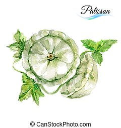 Watercolor patisson - Watercolor vegetables patisson...