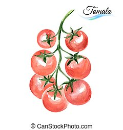 Watercolor tomato - Watercolor vegetables red tomato...
