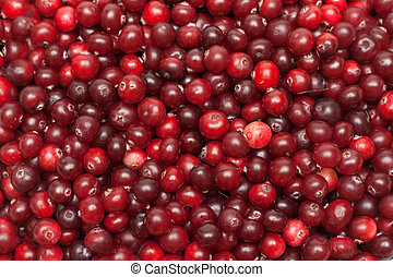 Cranberries put by background - Much red ripe cranberries...