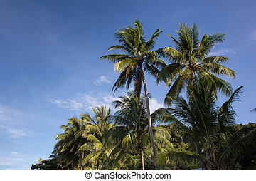 Palm trees over sky background