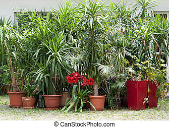potted plants - lots of potted plants in sunny ambiance