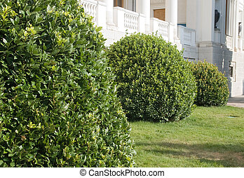 Topiary - Green bushes in a park trimmed in circle shapes