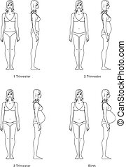 Pregnant woman - Vector illustration of pregnant women39;s...