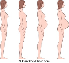 Pregnant woman - Vector illustration of pregnant female...