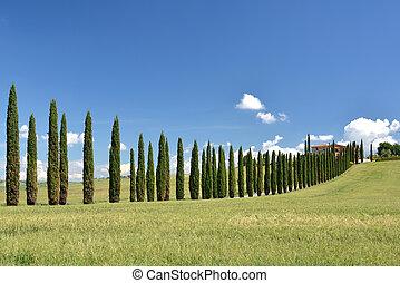 Włochy, Droga, cyprys,  Tuscany, Drzewa, Wiejski, Wzdłuż