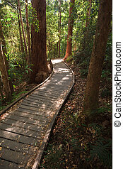 Sunshine breaking thru on wooden boardwalk in the rain forest