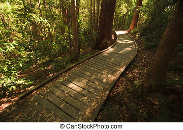 Boardwalk in rain forest at Mary Cairncross Park - Rain...