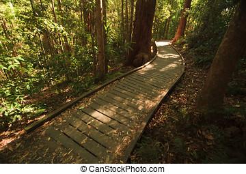 boardwalk, Lluvia, bosque, maría, Cairncross, parque