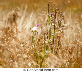 Soft Focus Effect of Purple Weeds - Soft Focus Effect on...