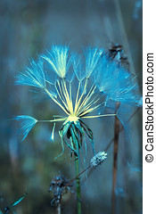 Soft Blue Abstract Dandelion Seed