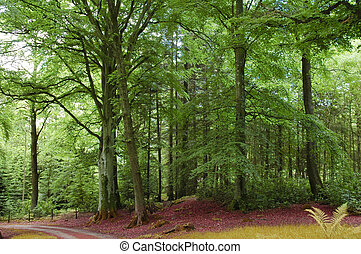 Green forest and road in the Highlands, Scotland - Green...