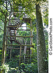 Birdwatching Tower - Wooden stairs of birdwatching tower on...
