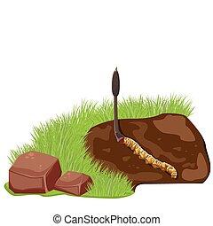 Print - illustration. Cordyceps sinensis.Dong Chong Xia Cao