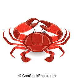 illustration red sea crab with claws. Vector