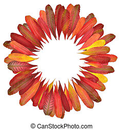 colorful leaves circle - circular background made up of...