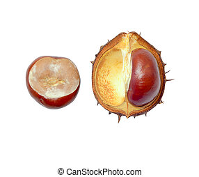 open fresh chestnut - fresh autumn chestnut in shell on a...