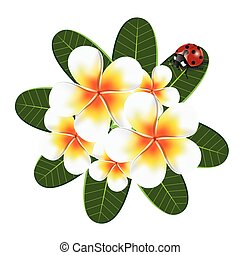 Print - illustration. frangipani with ladybird beetles on a...