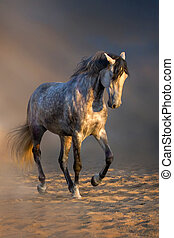 Grey horse trotting - Grey andalusian horse trotting in...