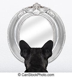 cão, em, a, espelho,