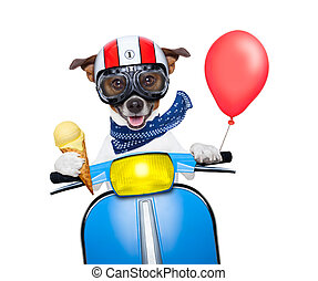 crazy speed dog - crazy silly motorbike dog with helmet and...