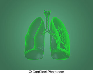 X-ray Lungs anatomy