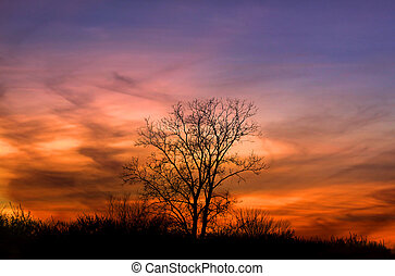 Sun set - Single tree with colorful sun set sky background