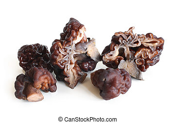 Gyromitra on white background