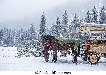 deux, chevaux, sur, a, neigeux, hiver, jour,