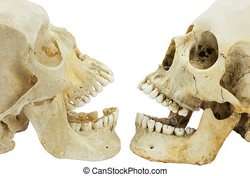 Two human skulls opposite of each other