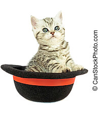 Young silver tabby cat in black hat
