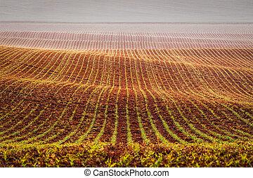 Rolling fields of Moravia, Czech Republic
